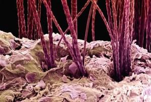 макроснимок   кожи