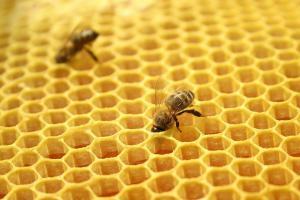 Пчела и воск