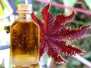 Касторовое масло для лечения волос от перхоти