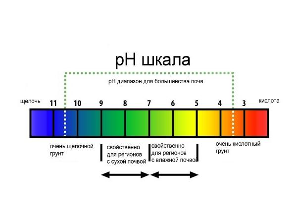 Шкала кислотности ph