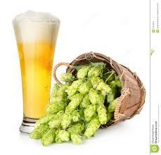 пиво с  хмелем