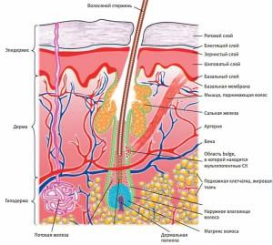 Структура волос выпадают жесткая вода