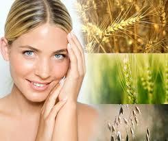 Масло из ростков пшеницы: свойства и применение