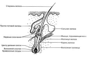 Витамины Перфектил от выпадения волос: состав и отзывы