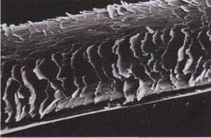Пористые волосы: лечение в домашних условиях