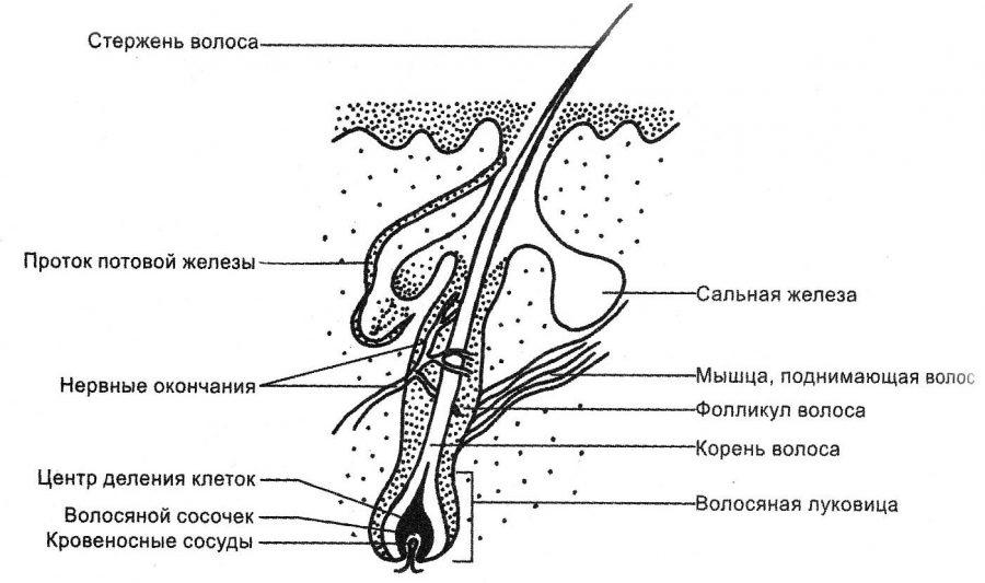 Усилитель роста волос nioxin hair booster отзывы