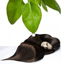 масло чайного дерева и шевелюра