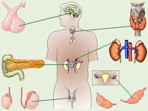 Выпадение волос под мышками: провоцирующие заболевания