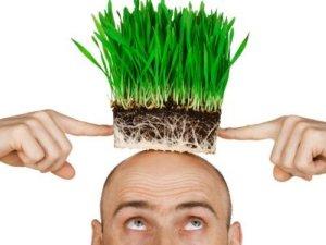Возможность пересадки волос