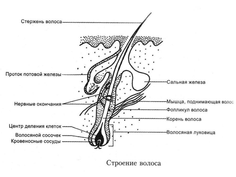 паразиты в коже человека симптомы